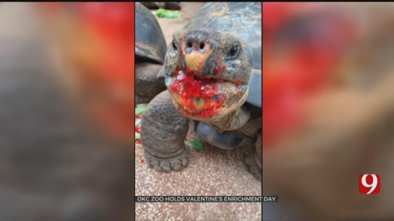 OKC Zoo Celebrates And Early Valentine's Day