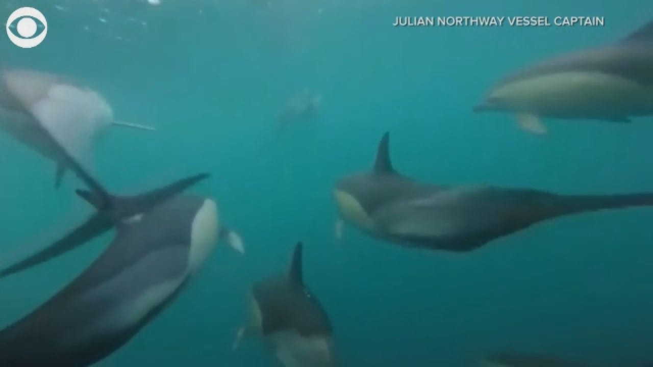 GoPro Captures A Close-Up With Dolphins