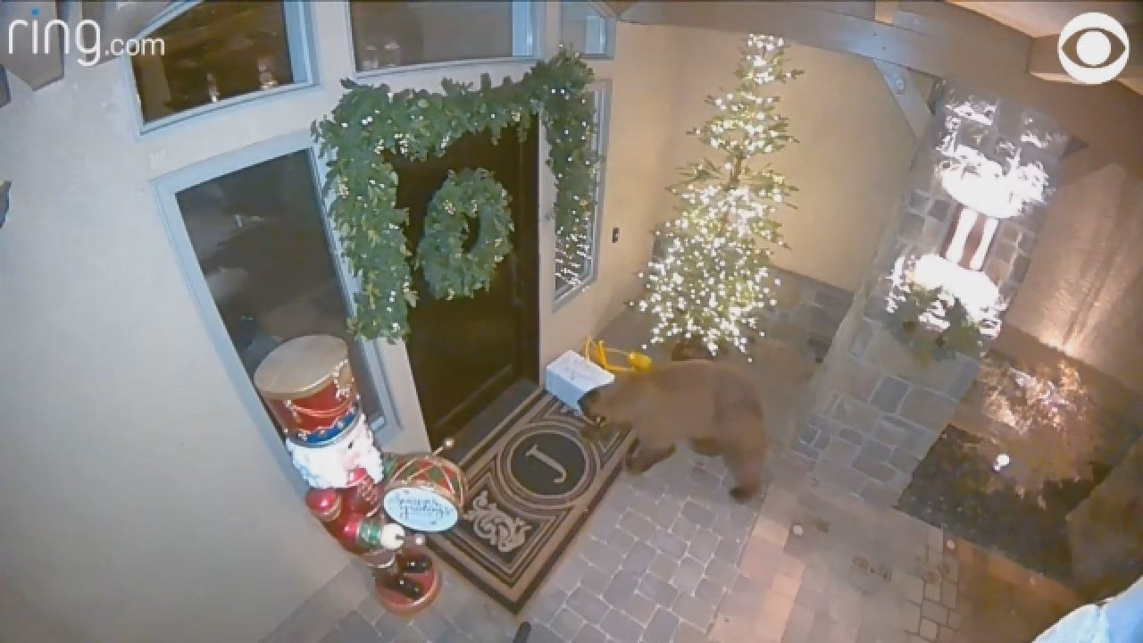 Footage Captures Bear As Porch Pirate