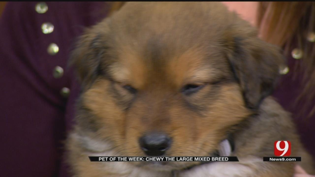 Pet of the Week: Chewy