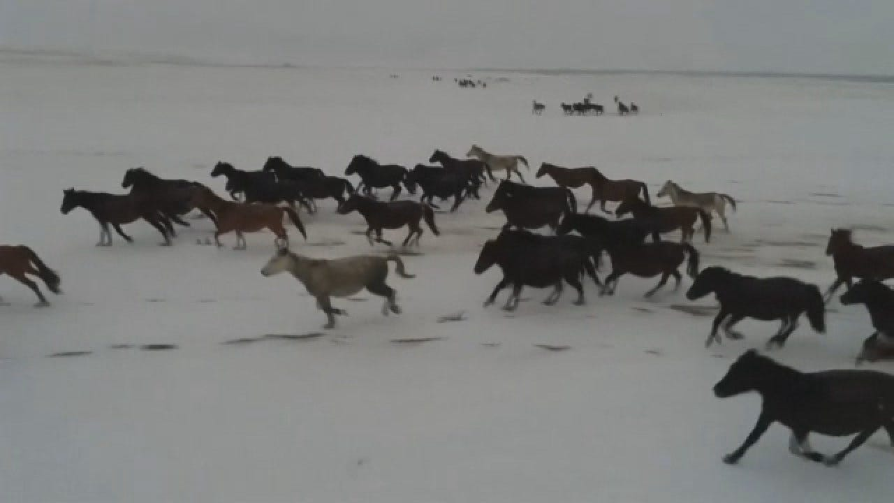 Hundreds Of Horses Run Through Snowy Mountains