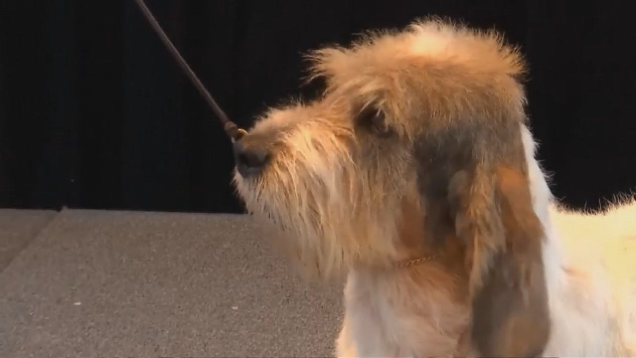 Westminster Kennel Club Dog Show Adds Two Breeds To Competition