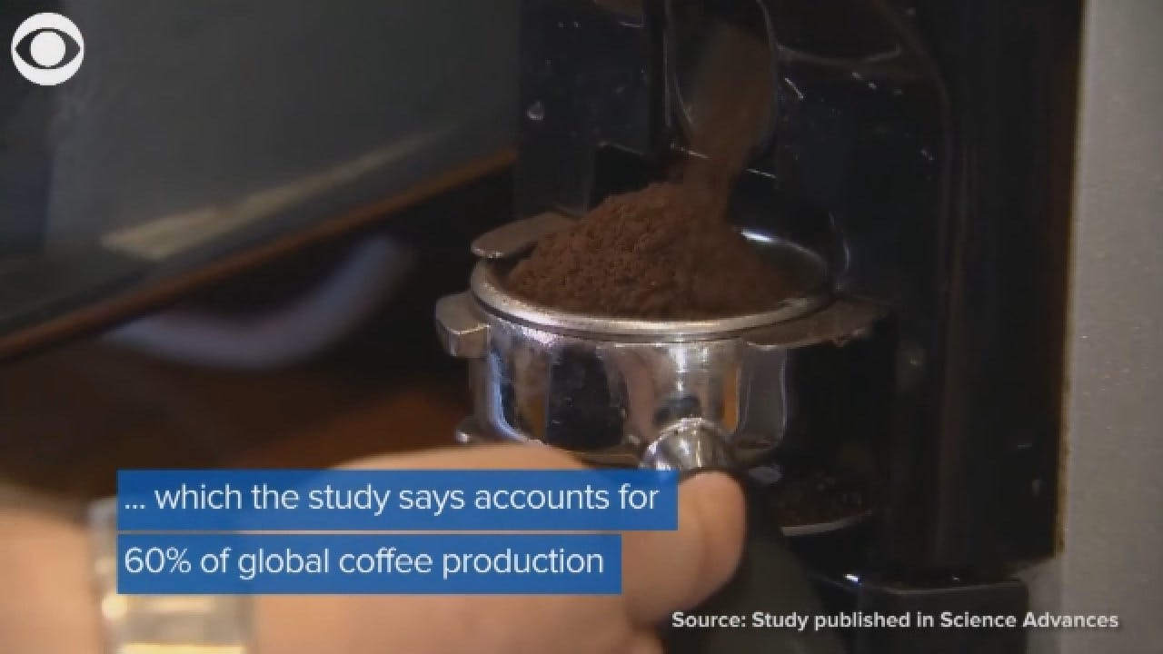 More Than Half Of Wild Coffee Species May Be At Risk Of Extinction