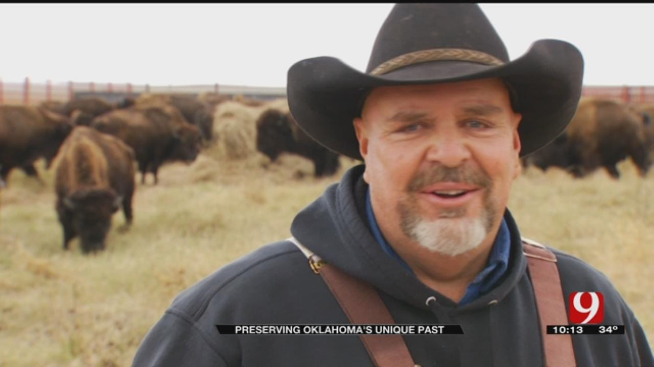 Oklahoma Bison Help Save America's Tallgrass Prairie