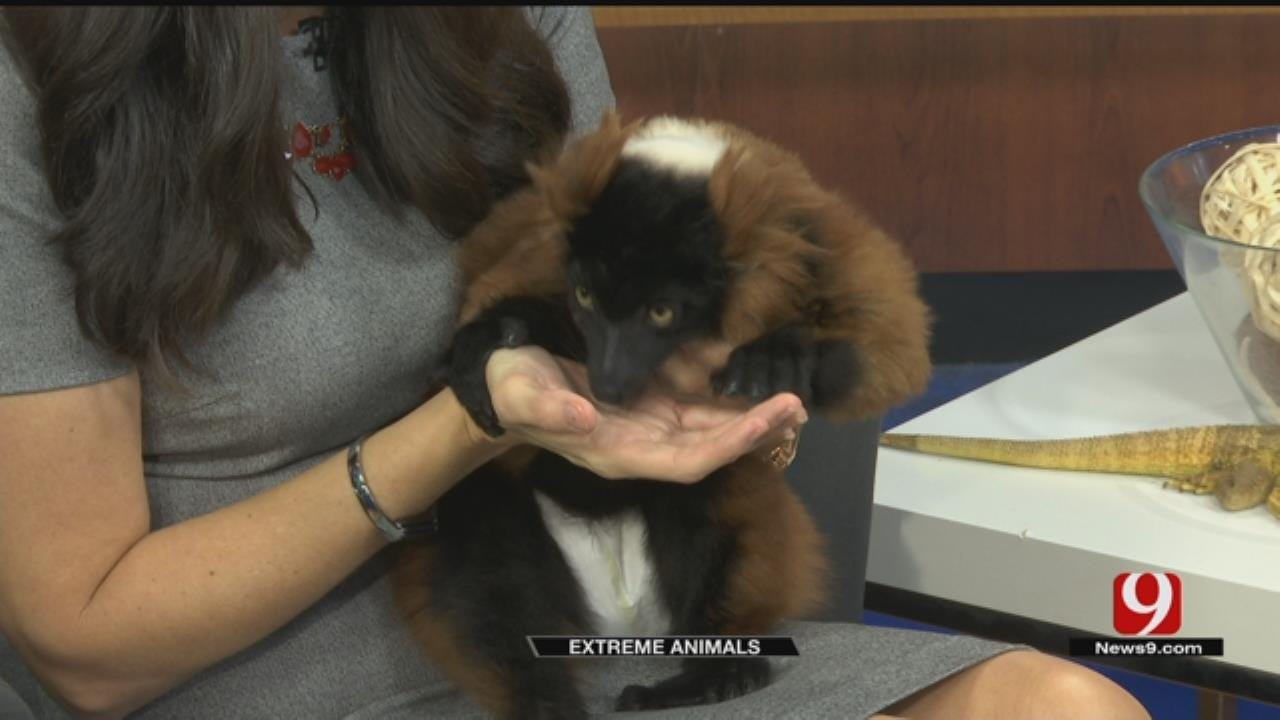 WATCH: Extreme Animals Visit News 9