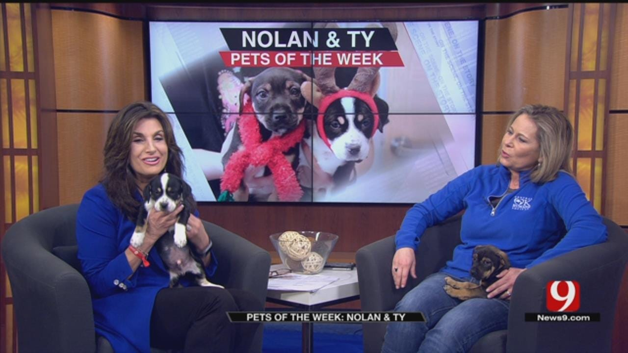 Pets of the Week: Nolan, Ty