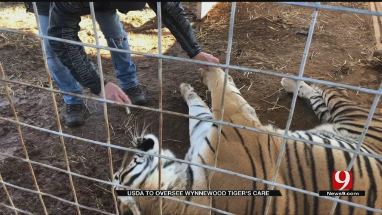 USDA To Oversee Wynnewood Tiger's Care After Alarming Video Released