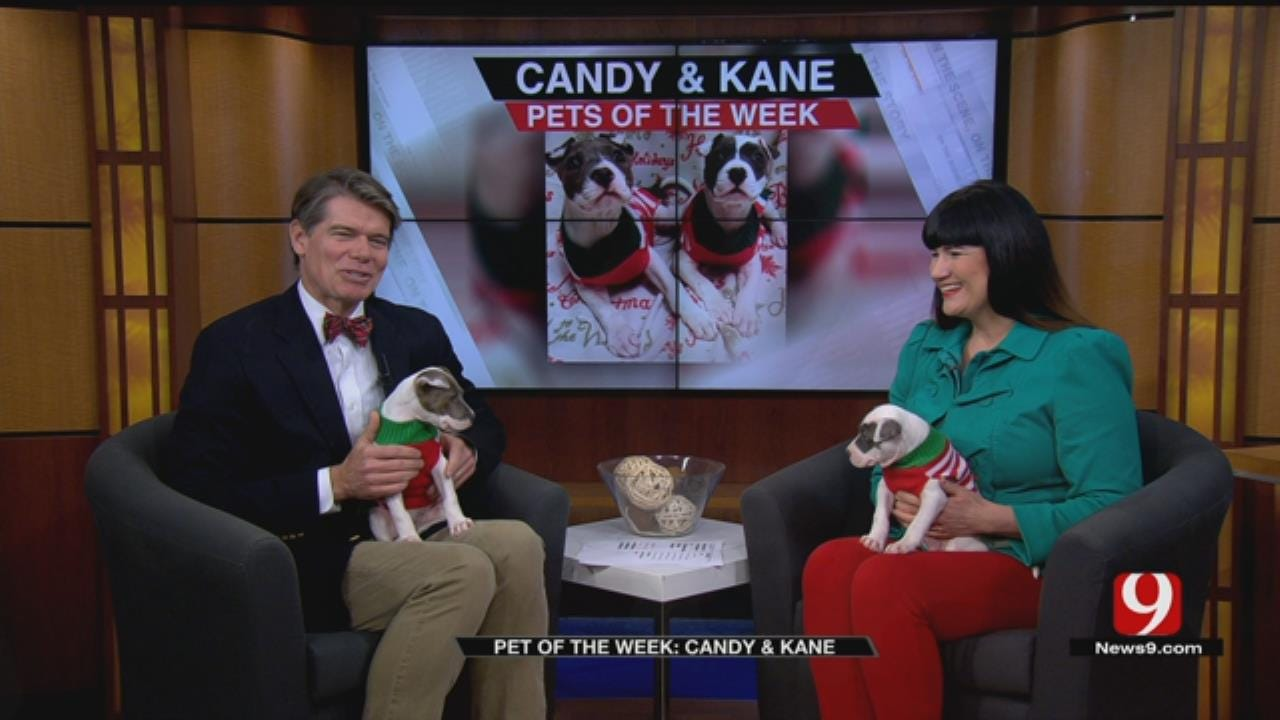 Pets of the Week: Candy & Kane