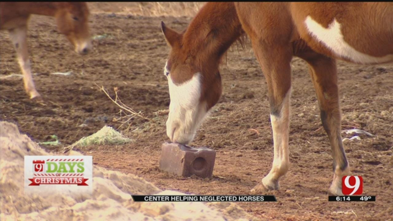 Donating To Center Helping Neglected Horses