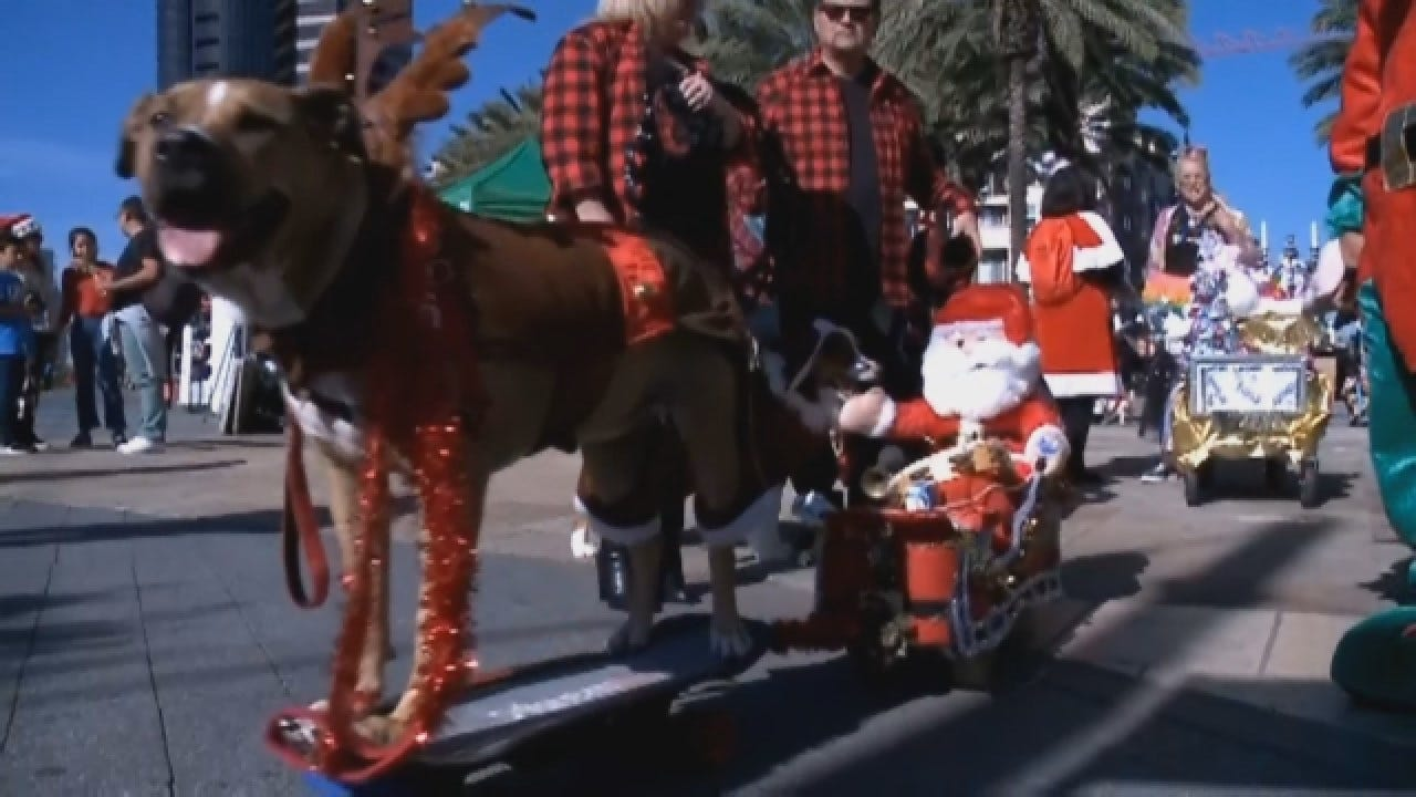 Dogs, Cats Dress Up For Holiday Pet Parade In San Diego
