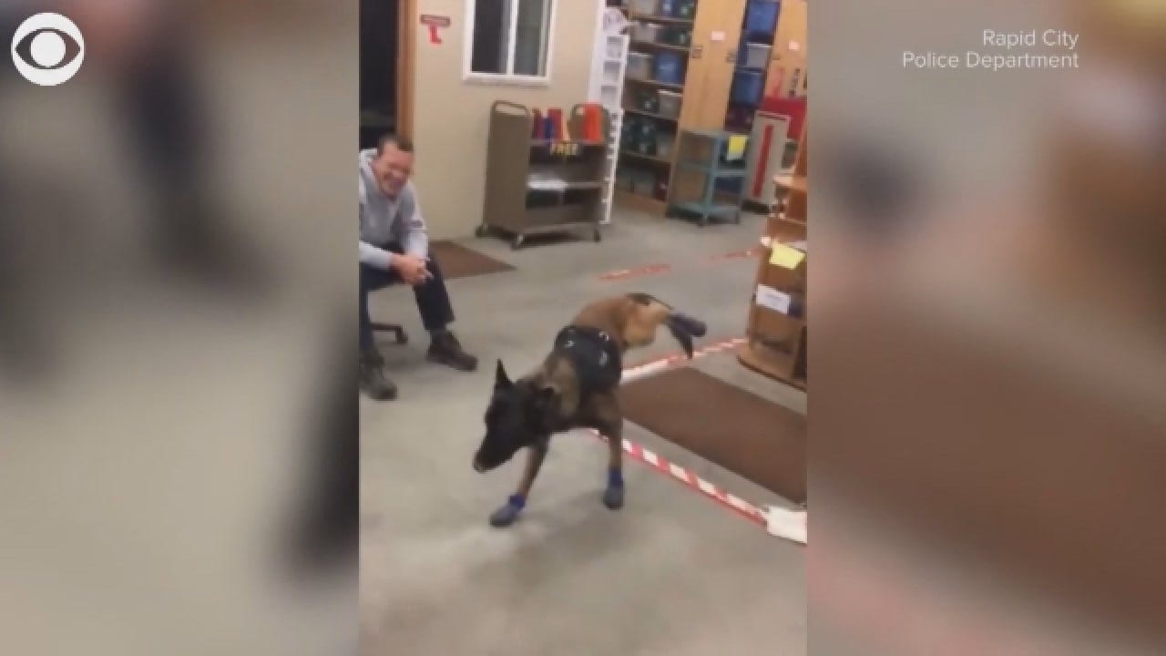 K-9 Dog Hates His Snow Boots