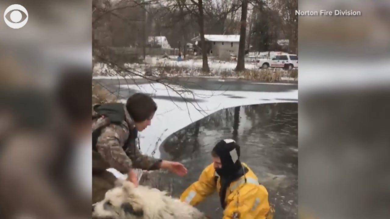 Caught On Camera: Dog Rescued From Freezing Pond