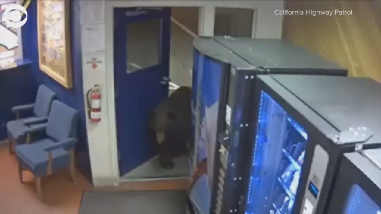 VIDEO: Bear Walks Into A California Highway Patrol Facility