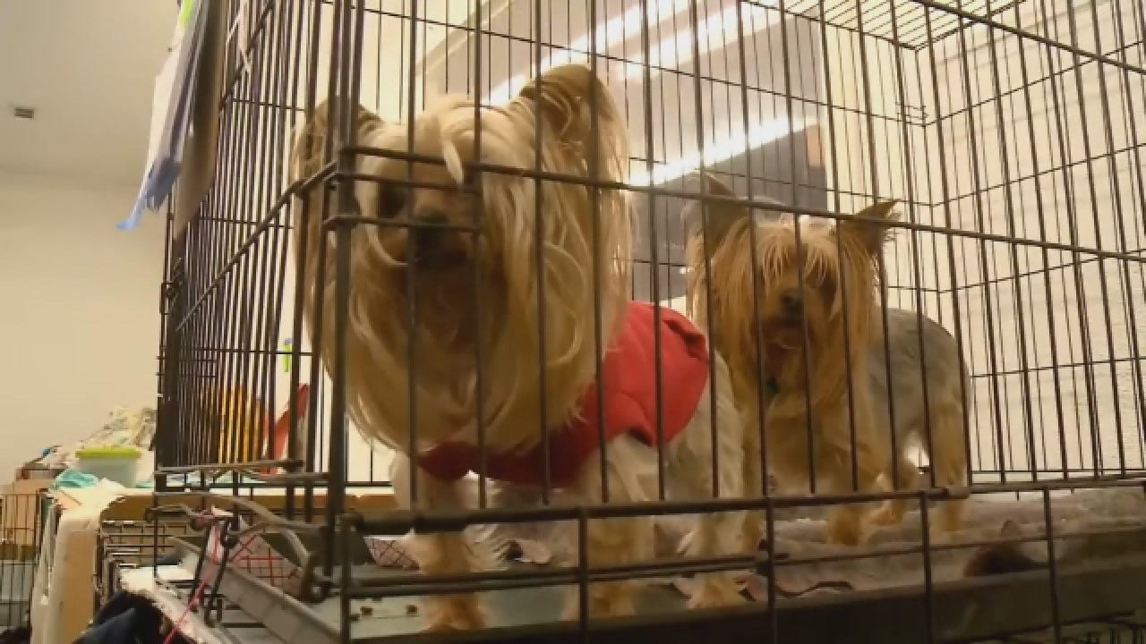 "Volunteers Work To Reunite Animals Lost In ""Camp Fire"""