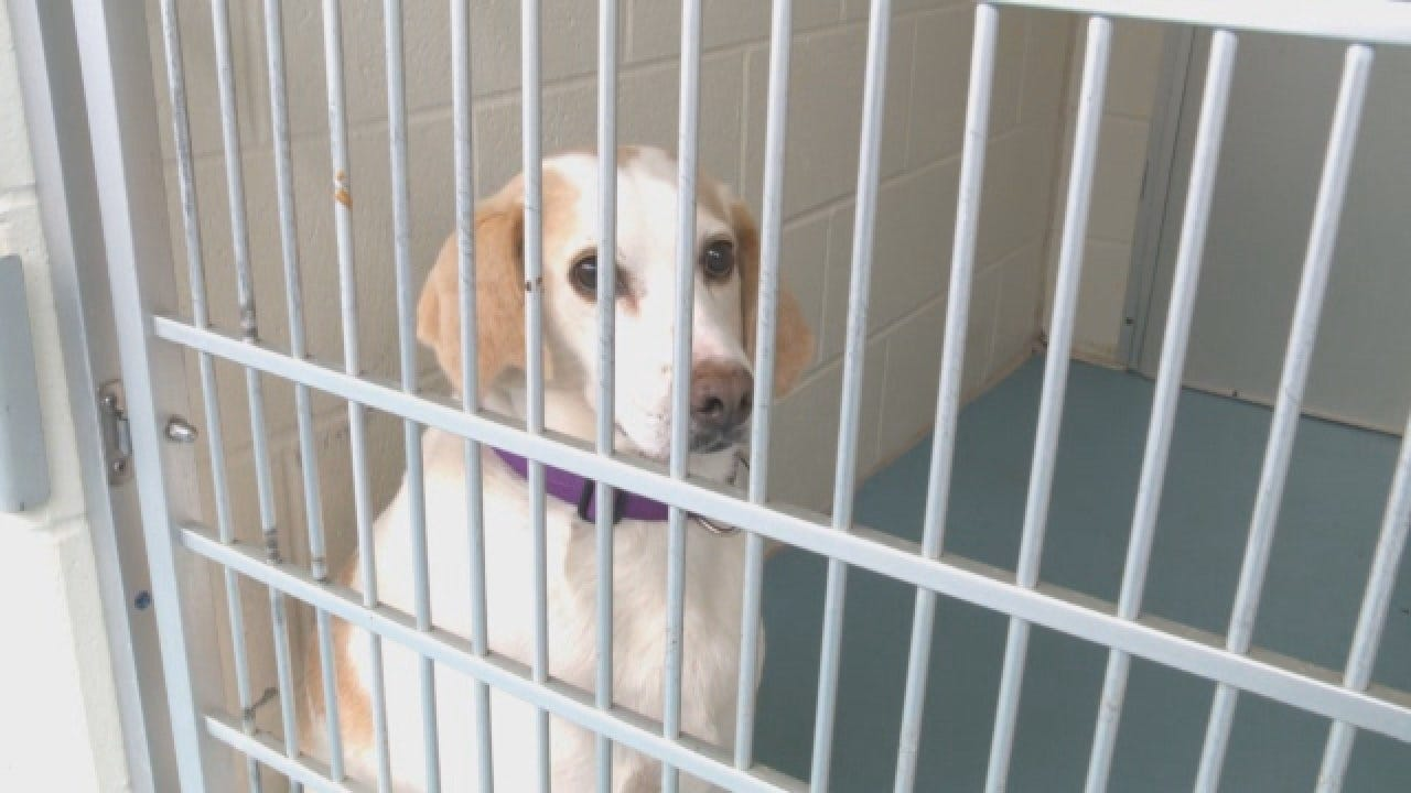 Virginia Humane Society Asks For Foster Families For Thanksgiving