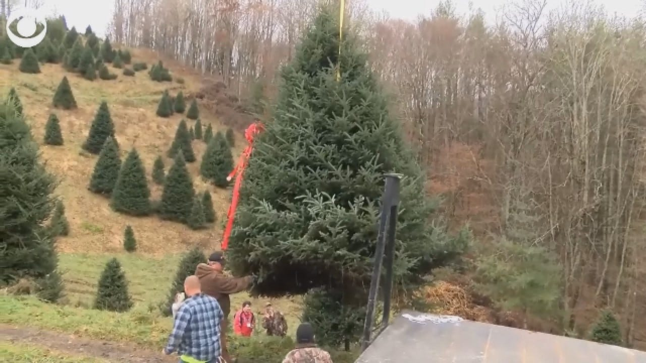 White House Christmas Tree Picked