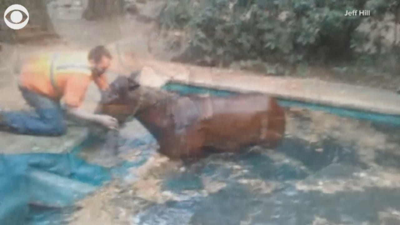 Horse Rescued From Pool After California Wildfire
