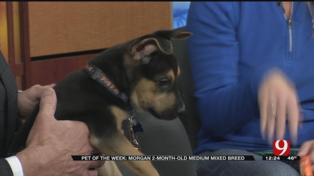 Pet of the Week: Morgan
