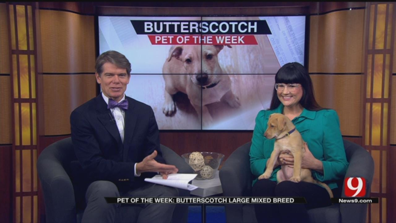Pet Of The Week: Meet Butterscotch