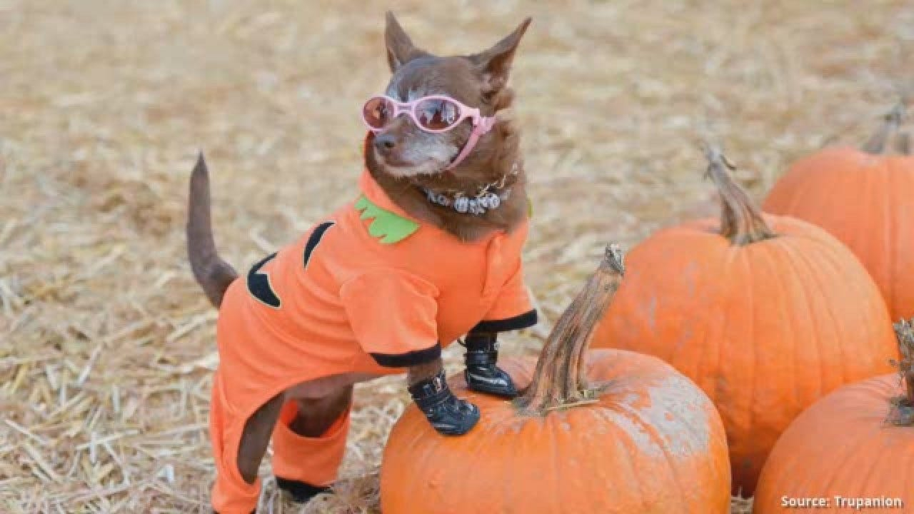 Halloween: What You Need To Know About Pets And Candy