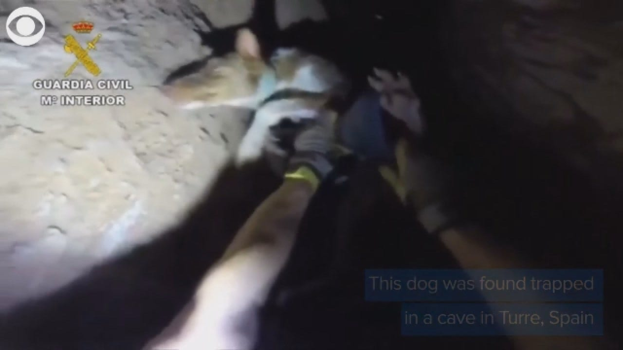 Dog Rescued From Cave In Spain