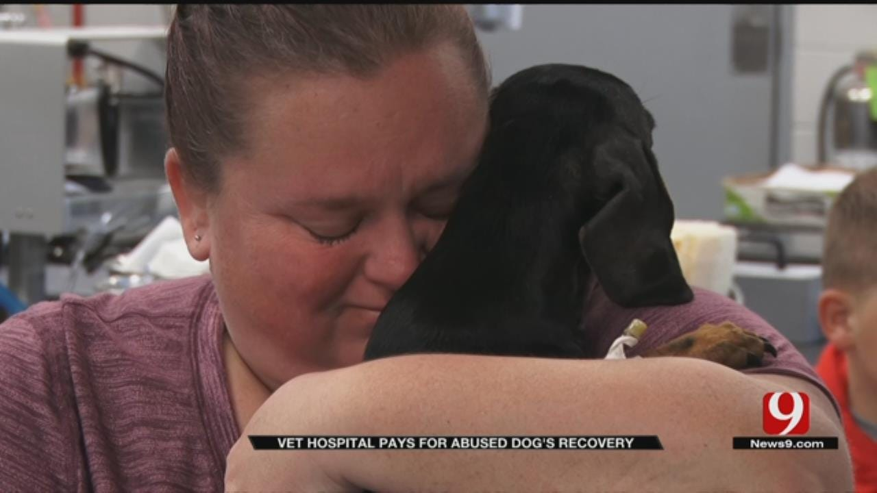 Local Vet Covers Surgery Costs For Lawton Dog Tortured By Child