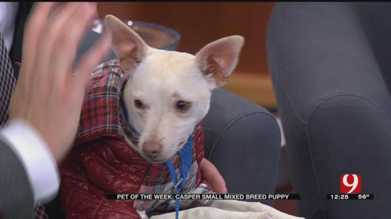 Pet of the Week: Casper