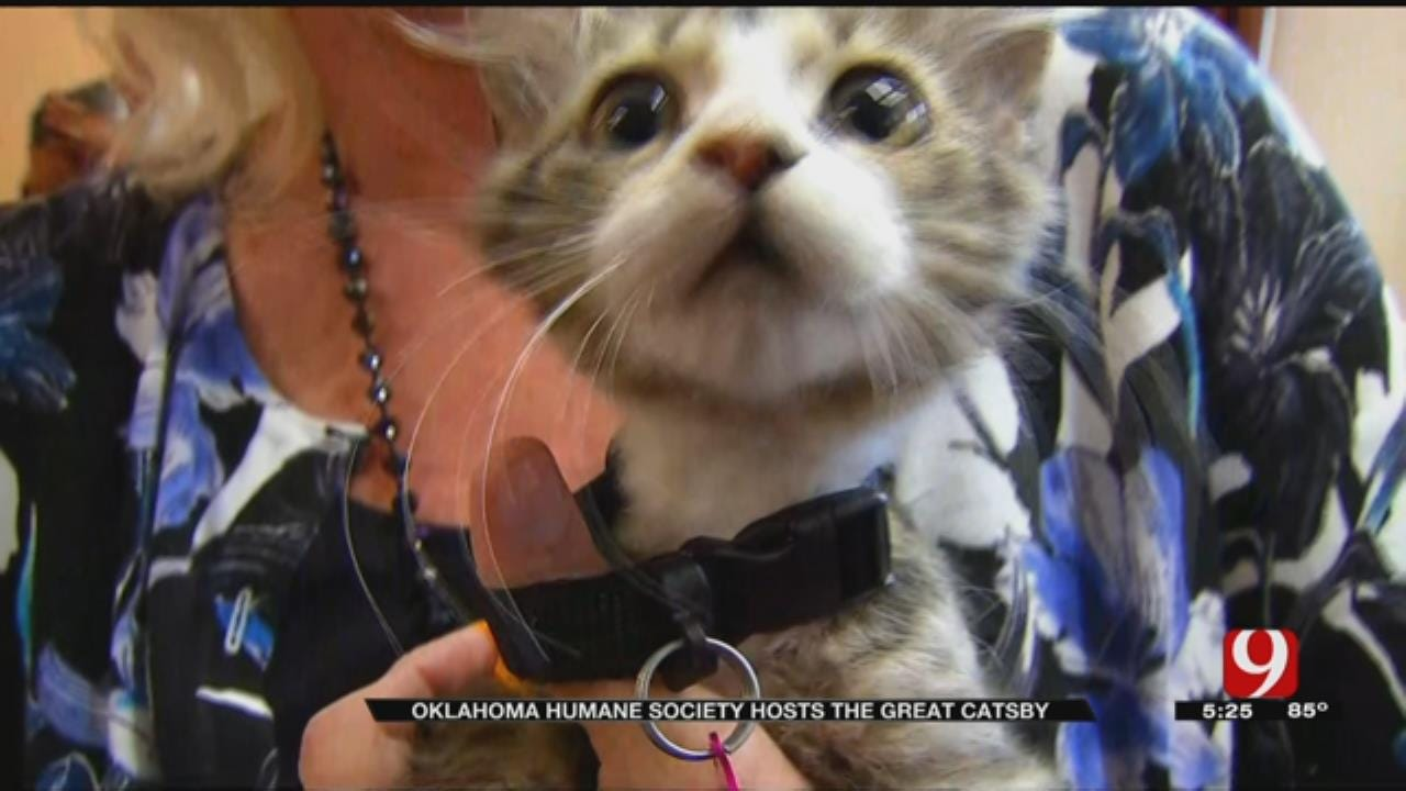 Skirvin Hotel Hosts Cat Adoption Event, 'The Great Catsby'