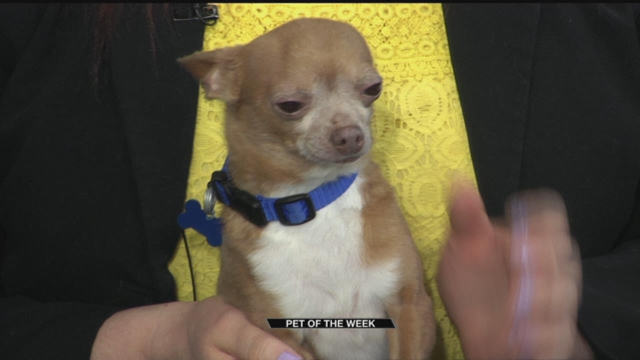 Pet(s) Of The Week: Tooco & Dough Boy