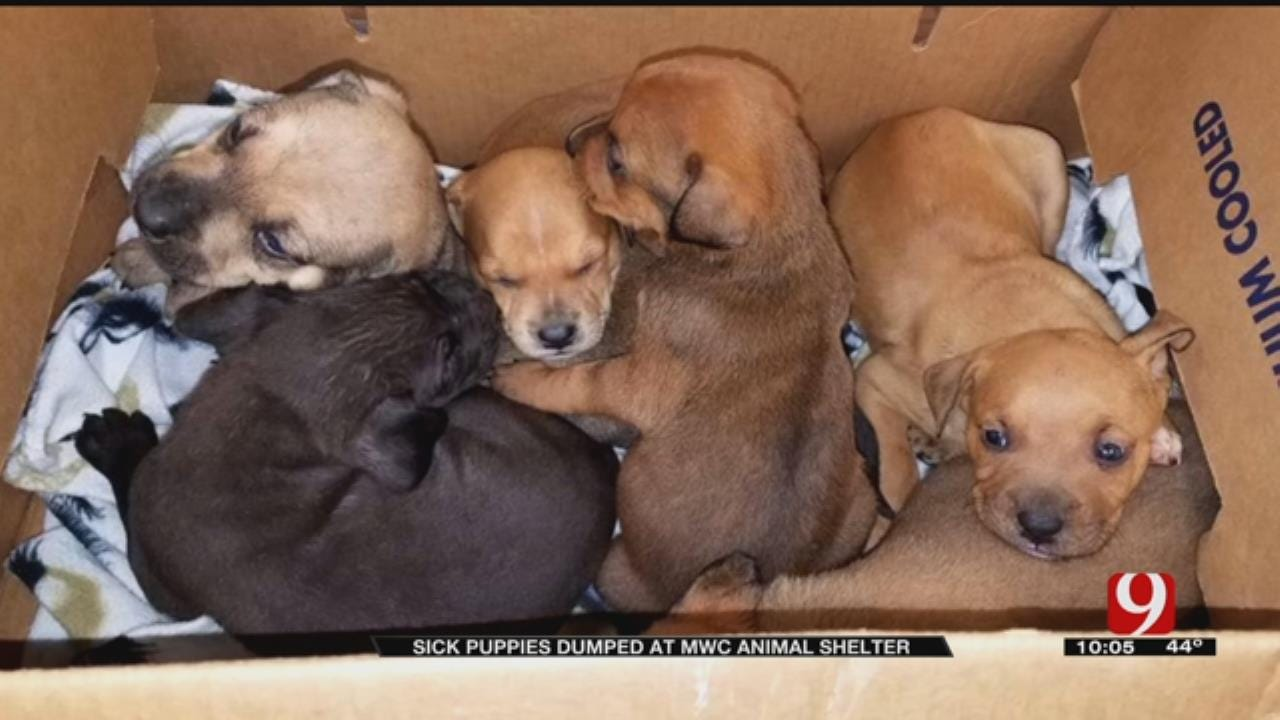 Puppies With Parvo Dumped Off In MWC