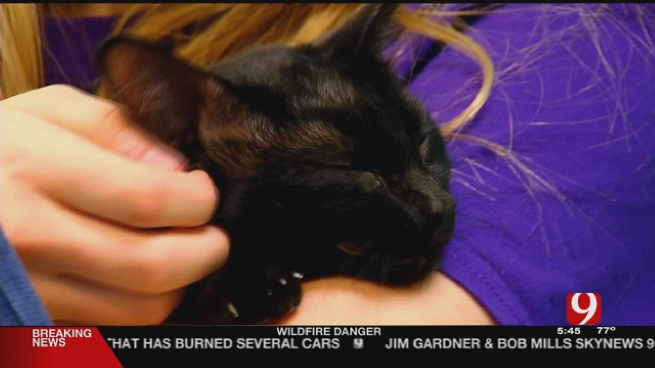 OKC Animal Welfare Offering Free Pet Adoptions For 'St. PAW-trick's Day'