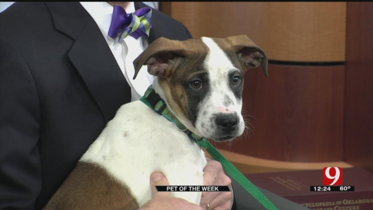 Pet Of The Week: Meet Ivy