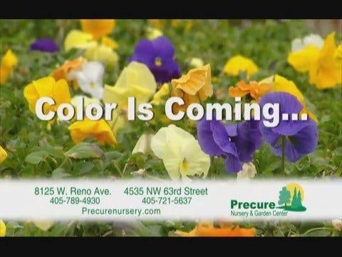 Precure Nursery: Color is Coming Preroll - 02/18