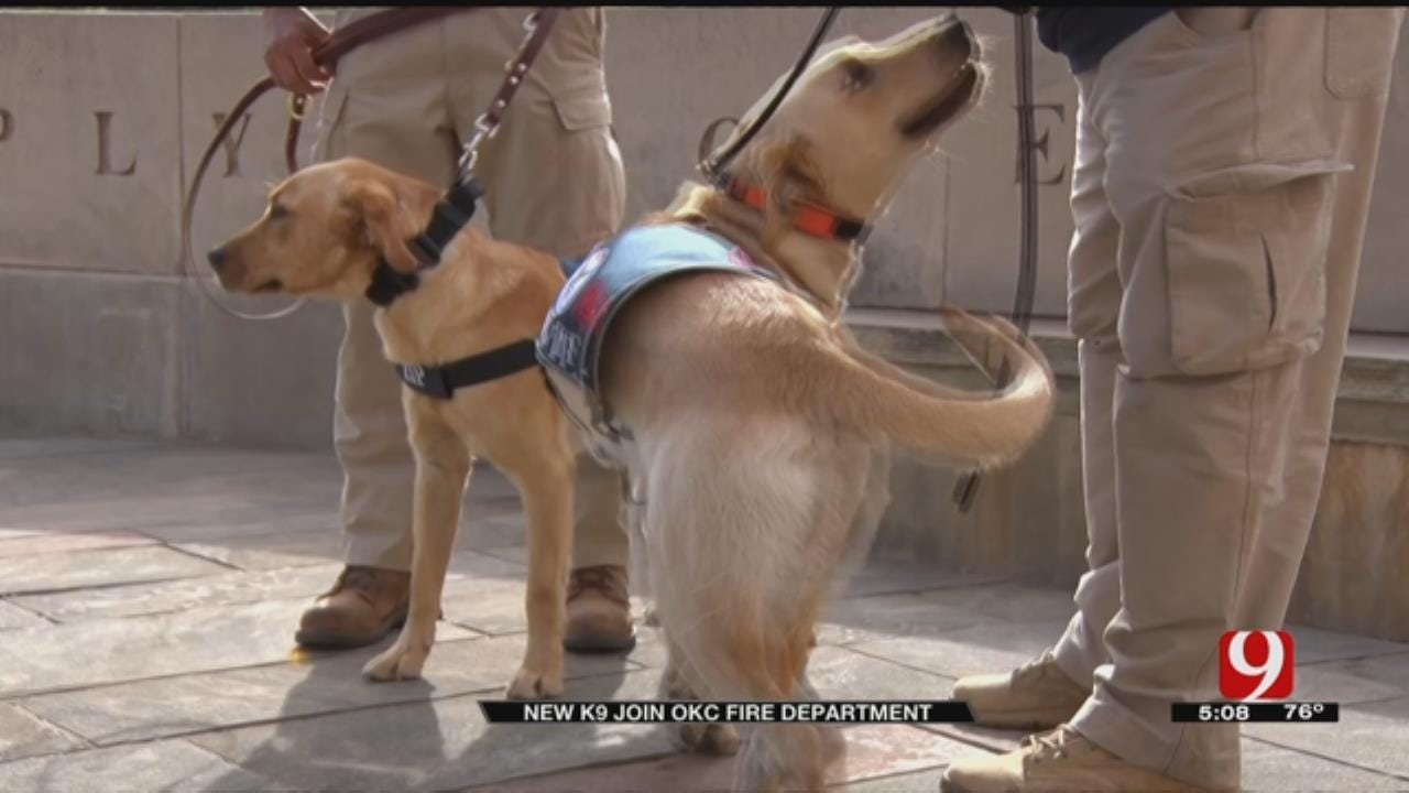 Switzer Dogs Help Complete OKCFD Search And Rescue Team