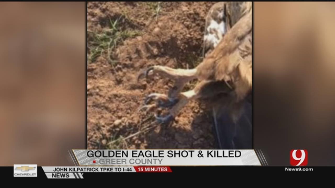Golden Eagle Found Killed In SE Oklahoma