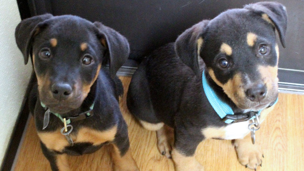 Pet(s) Of The Week: Meet Pancho & Lefty