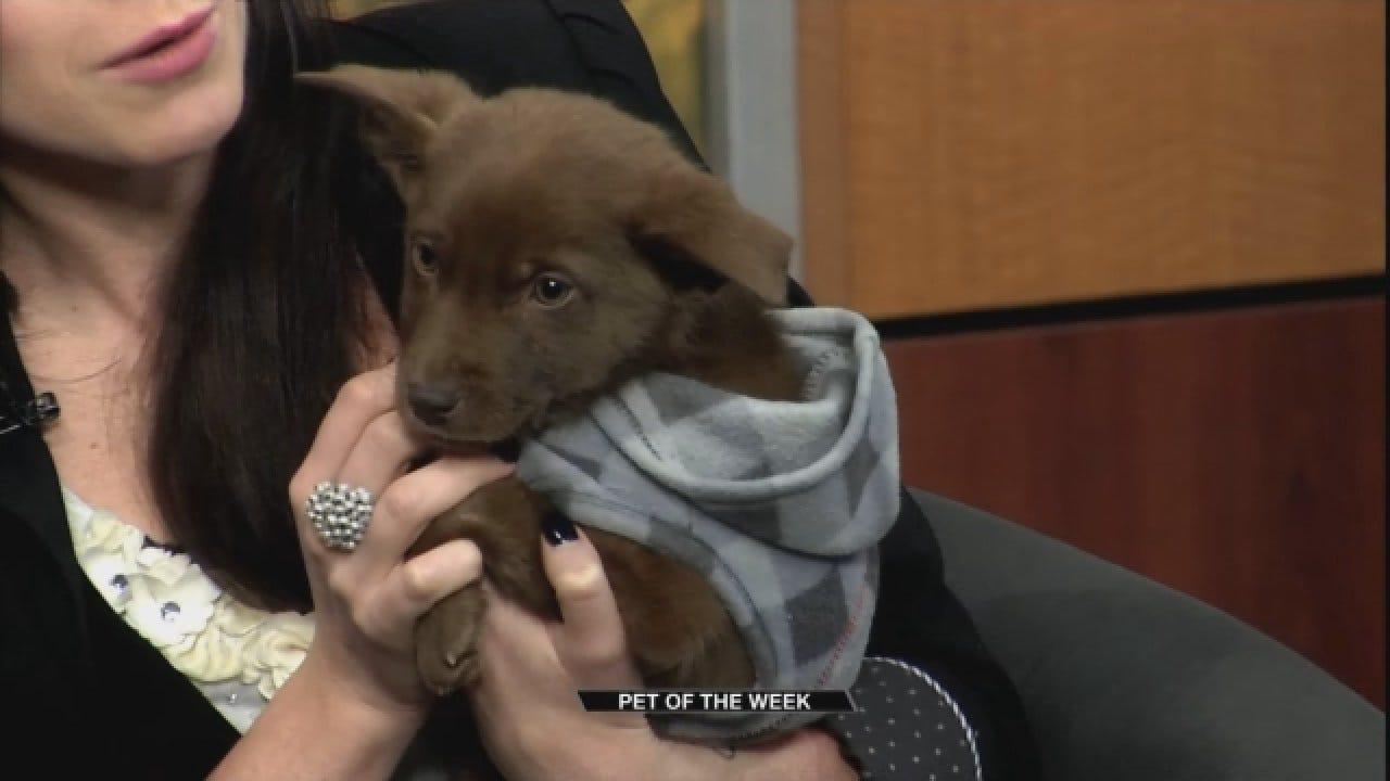 Pet Of The Week: Meet Lucky