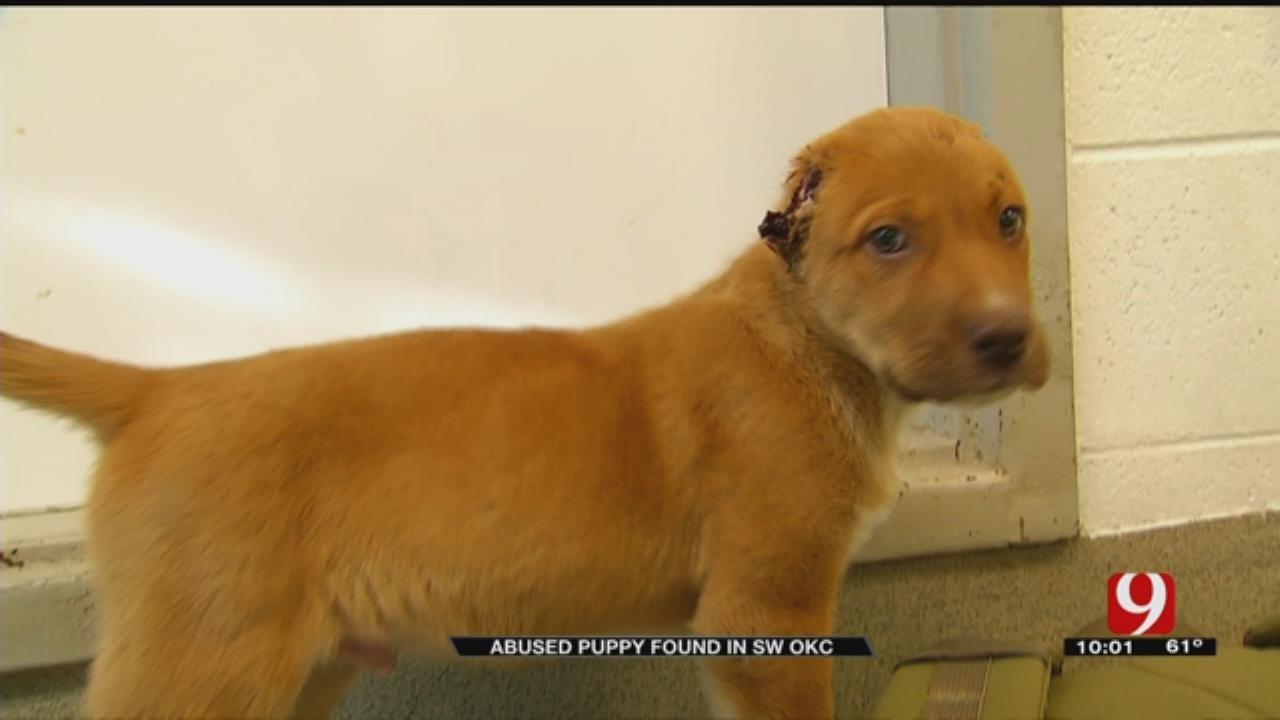 Injured Puppy In OKC