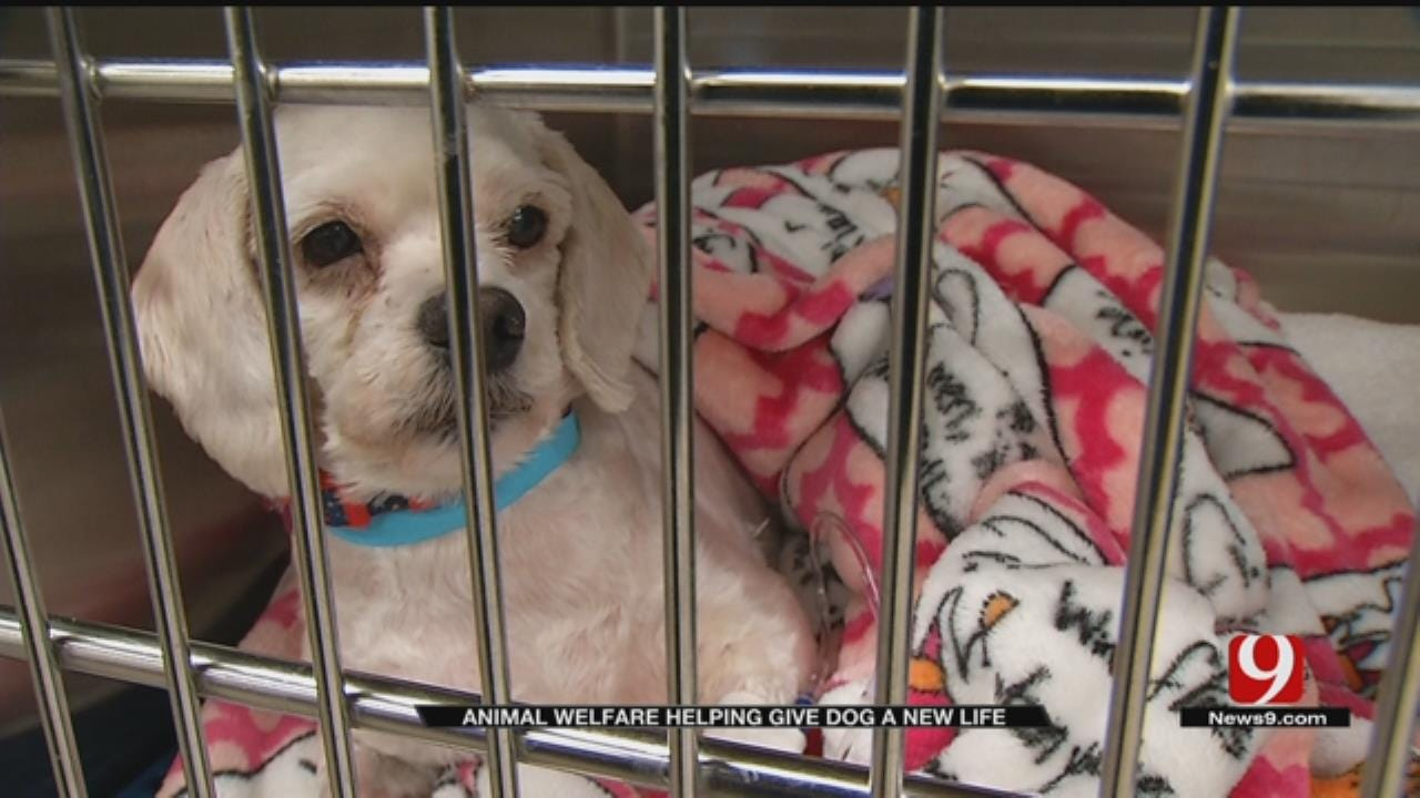Severely Matted, Injured Dog Recovering After Rescue
