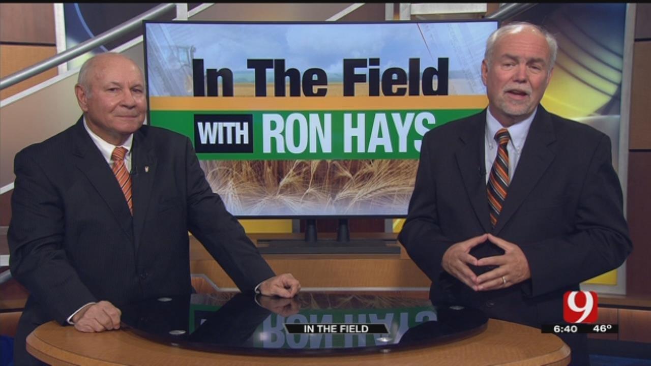 In The Field: Oklahoma's Pecan Harvest