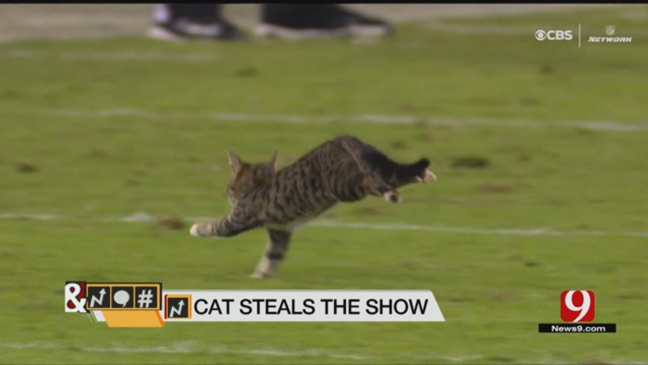 Trends, Topics & Tags: Cat Steals The Show