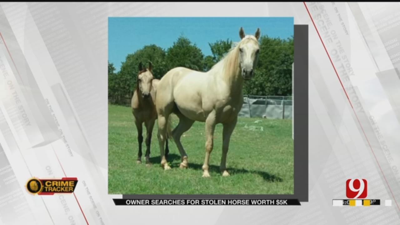 Palomino Horse Worth $5,000 Stolen From NE OKC Home