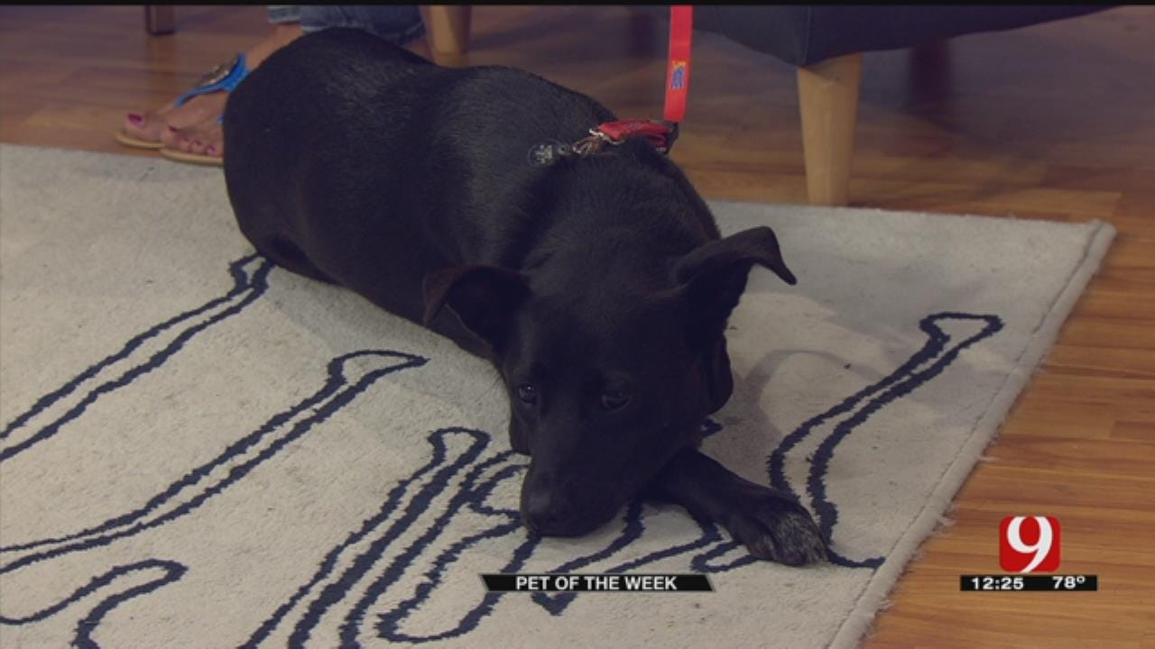 Pet Of The Week: Meet Sammie