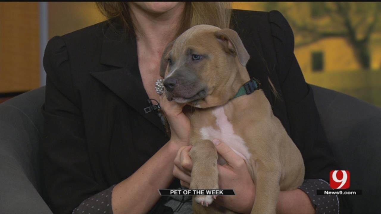 Pet Of The Week: Meet Pretty Boy Floyd