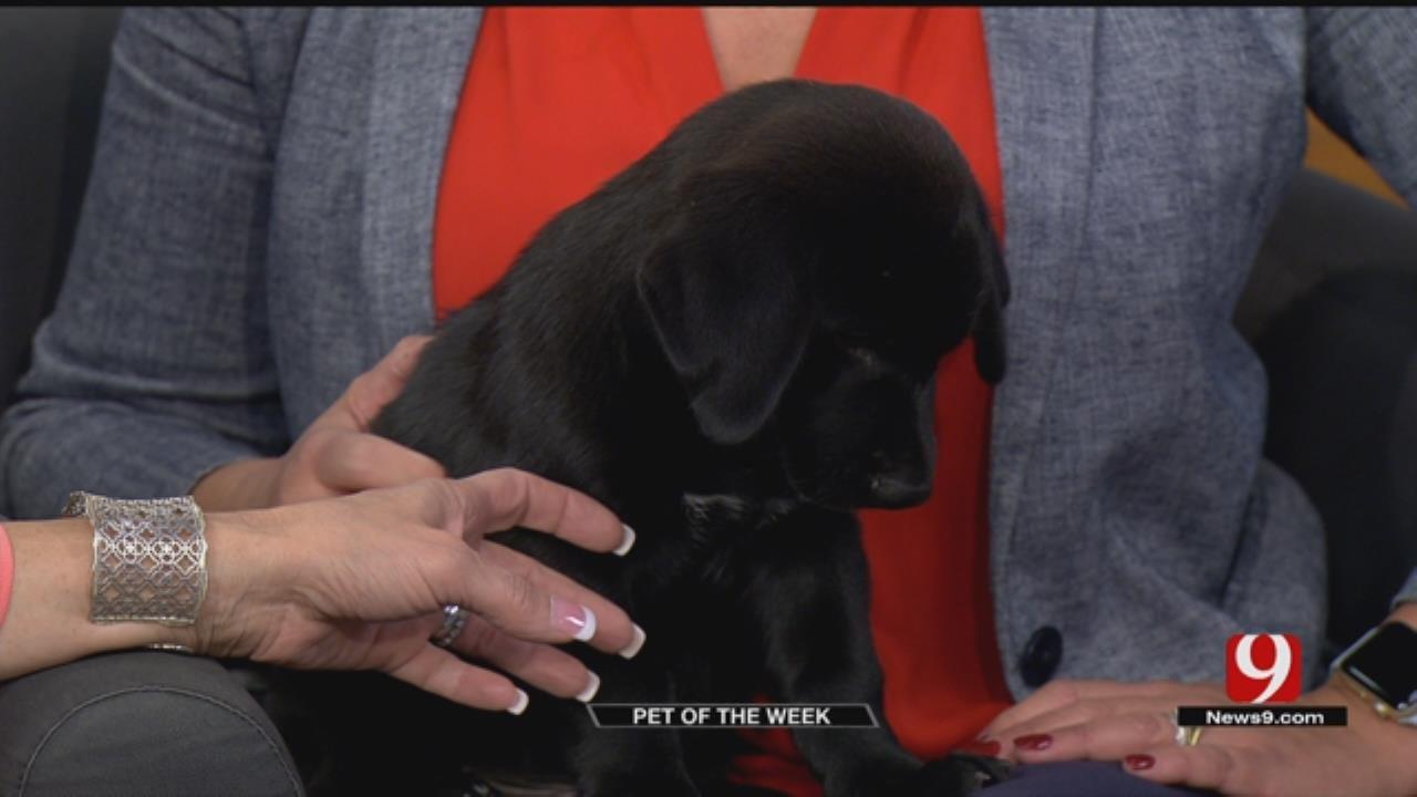 Pet Of The Week: Meet Fenrir