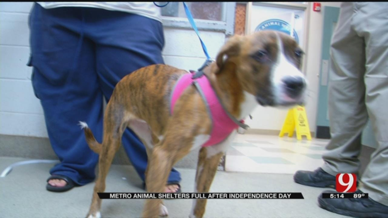 Lost Pets Fill OKC Animal Welfare After Fireworks