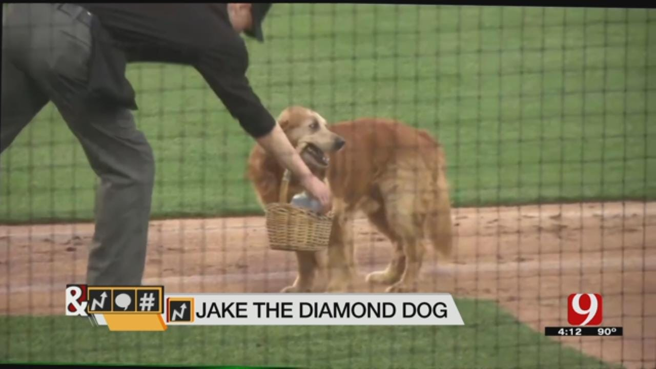 Trends, Topics & Tags: Jake 'The Diamond Dog'