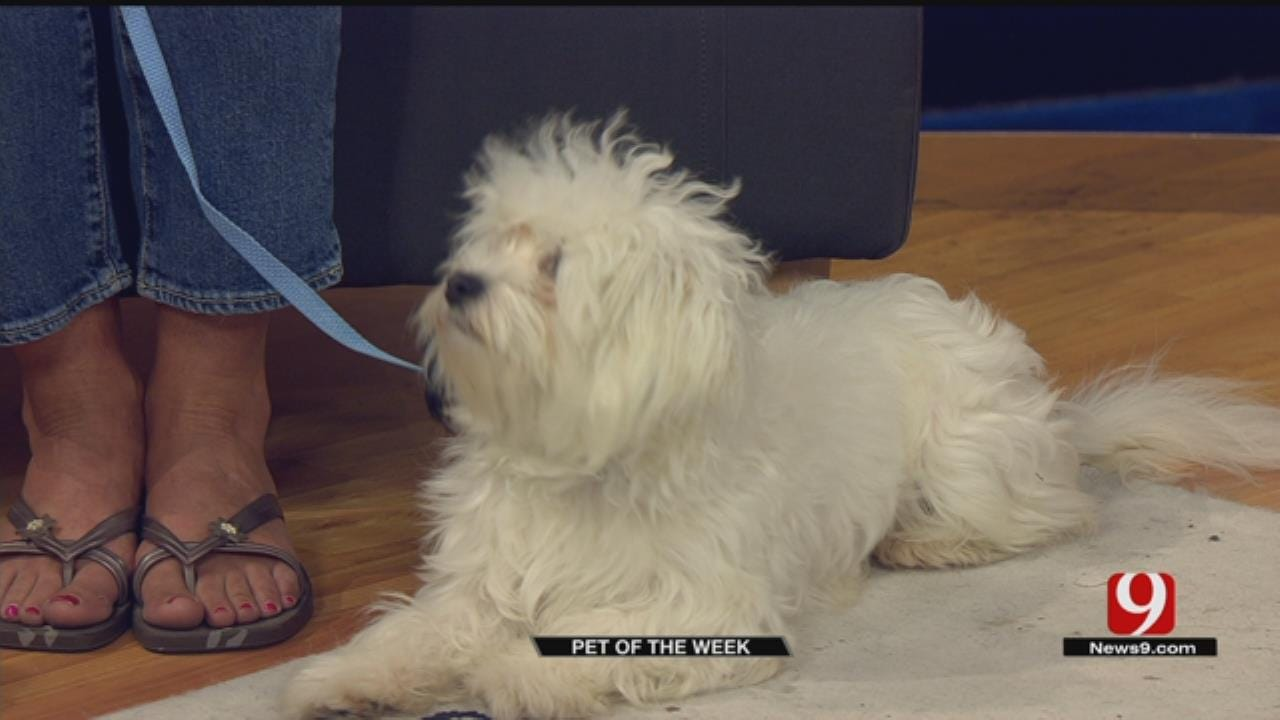 Pet Of The Week: Meet Otto