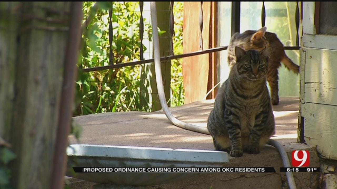Residents Upset Over Change To OKC Stray Cat Ordinance