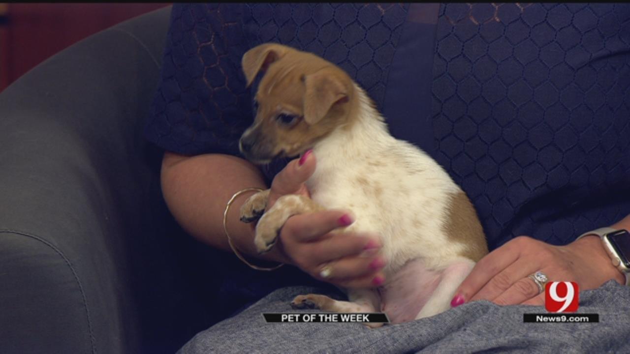 Pet Of The Week: Meet Lucille